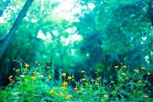 森の中の花
